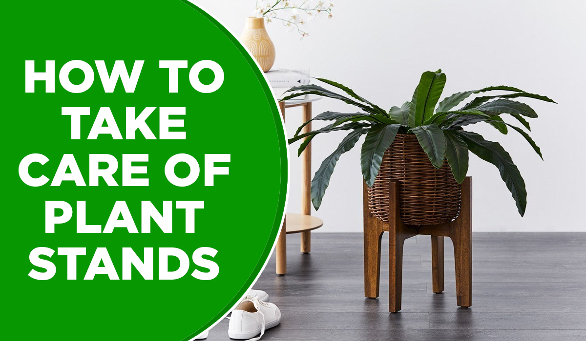 HOW TO TAKE CARE OF PLANT STANDS