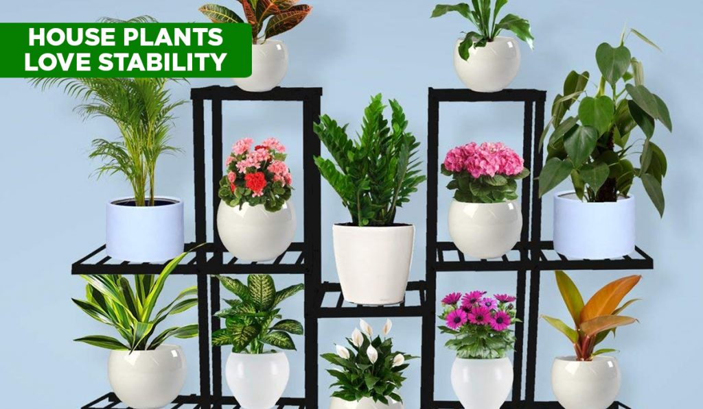 Plant stand houseplant